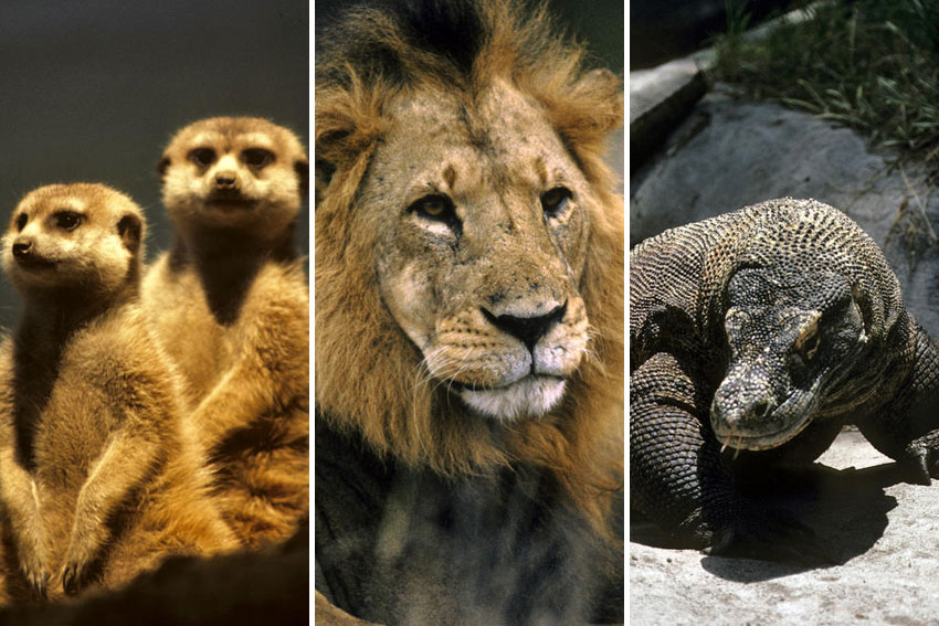Asamblea General adopta resolución para proteger la vida silvestre