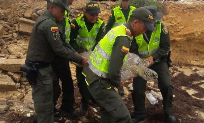 Policía de Colombia en lucha contra el tráfico ilegal de especies nativas